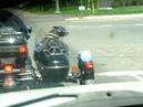 Собака питбуль в коляске, посмотри на очки!