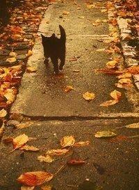 В осени есть и легкая грусть, и робкие надежды Но больше всего в ней золота. Теплого и уютного золота.Доброго утра!) Удачного и счастливого дня!(источник: