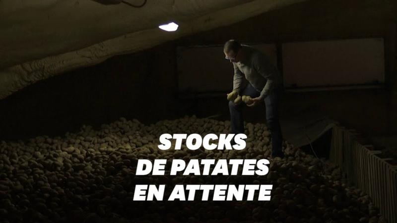 Les producteurs de pomme de terre appellent à l'aide face à l'effondrement de la demande