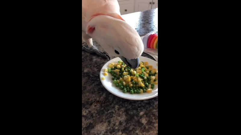 A snack for me_ Thanks Dad! _smiley__heart_️ ( HD ).mp4