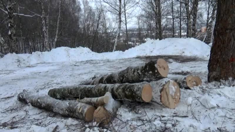 В Фатьяновском парке вырублено несколько живых деревьев Пораженные короедом не тронуты