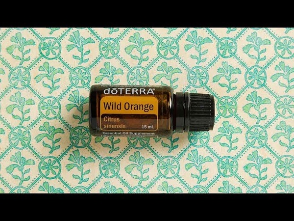 Дикий Апельсин Citrus sinensis