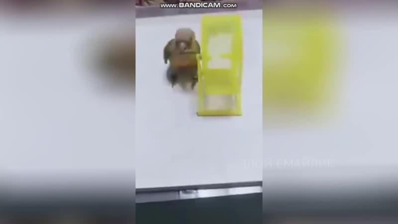 Смотрите со звуком XDDD Рок-попугай vs Хомяк