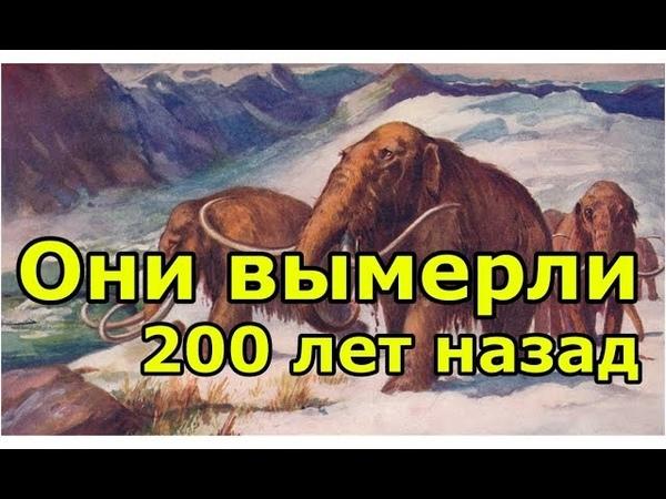 Мамонты вымерли 200 лет назад