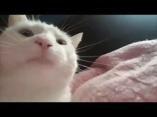 кот отрывается под музыку из миньон раша