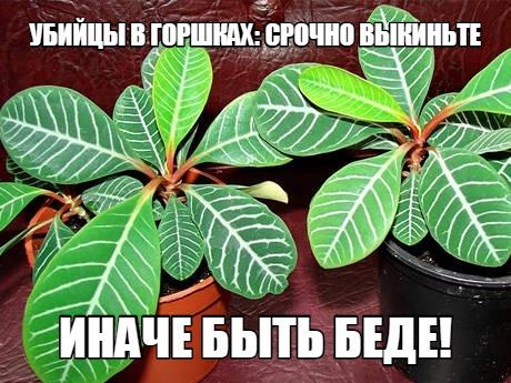 УБИЙЦЫ В ГОРШКАХ: СРОЧНО ВЫКИНЬТЕ, ИНАЧЕ БЫТЬ БЕДЕ! ... ...