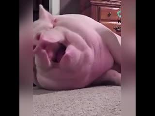 Как спят животные:)