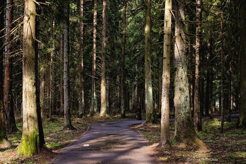 Прогулочная дорожка в лесопарке 11 района. Настоящий сосновый лес в ста метрах от дома.