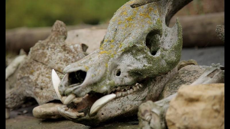 Древний мир музей под открытым небом Ура Самара Каменный Брод