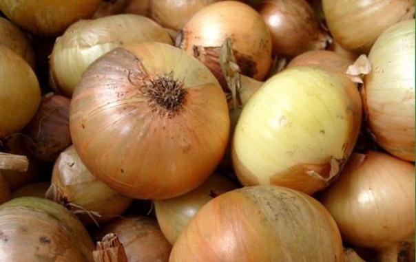 ПРИЧИНЫ ГНИЕНИЯ ЛУКА Если лук начинает гнить, возможно, в луковицы проникли личинки вредителей: лукового корневого клеща или стеблевой нематоды.В первом случае чешуя сначала покрывается бурой