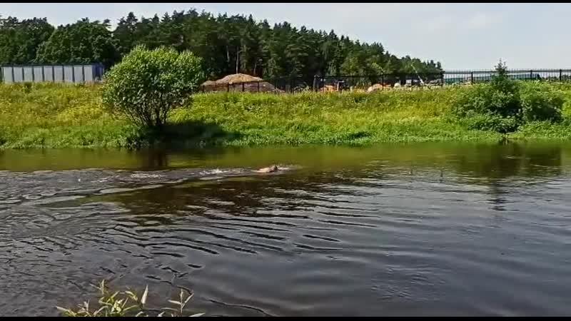 Готовимся к стартам на открытой воде плывем против течения
