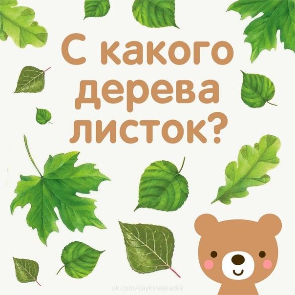 С КАКОГО ДЕРЕВА ЛИСТОК Полезная игра для детей Идём в парк и собираем с ребёнком опавшие листья, определяем с какого они дерева, показываем и называем это дерево. Затем пpeдложите ребёнку самому