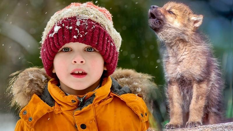 Волчонок жалобно скулил и карабкался по склону Мальчик пришел на выручку а вскоре произошло