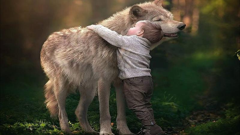 Отец подарил сыну волчонка а через годы волк спас мальчика