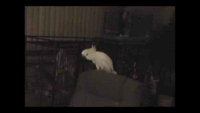 Птиса