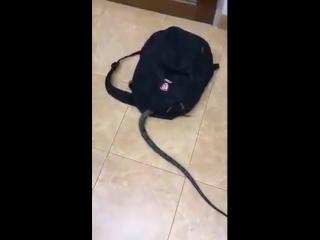 Змея залезла в рюкзак