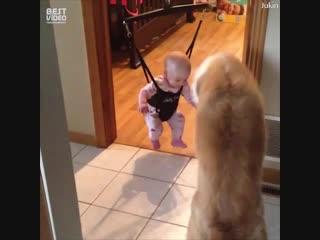 Подборка детей и собак