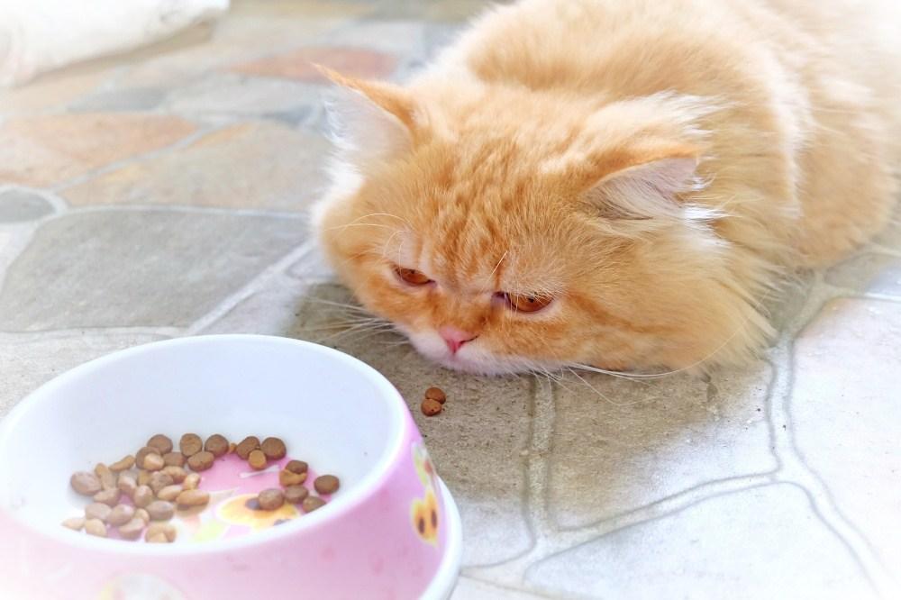 Кошка Плохо Ест Похудел. Кошка плохо ест