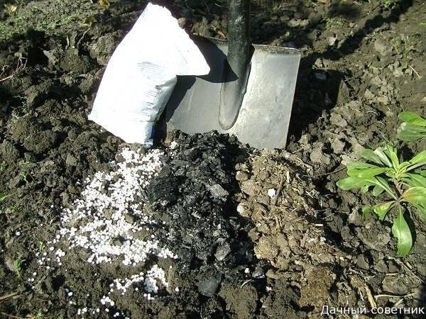 Какие удобрения вносить осенью Осень самая ответственная пора для дачников и садоводов. И каждого, наверное, посещают тревожные мысли о губительности зимних морозов. Так хочется, чтобы любимые