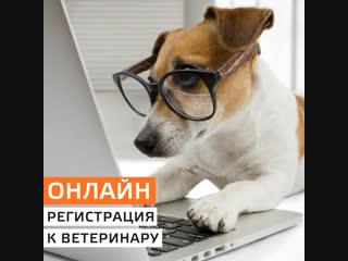 Онлаин-запись в государственную ветеринарную клинику