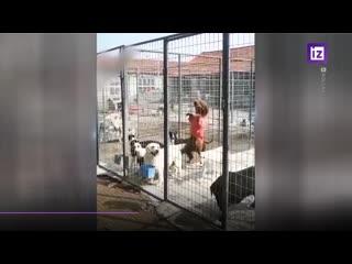Собачий побег из карантина