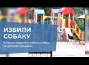 В Перми подростки избили собаку на детской площадке
