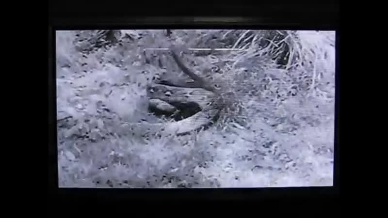 Питон против Пантеры   Python vs Panther