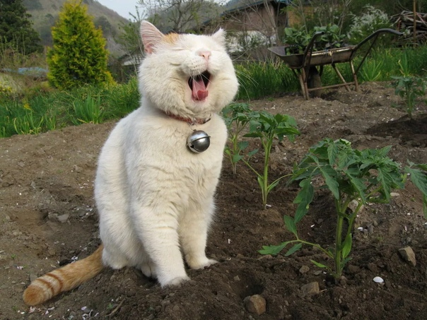 А вы знаете, как отучить котов ходить по грядкам 1. Очень результативны в этом плане датчики движения, которые подключаются к садовому шлангу или системе автоматического полива. Всякий раз,