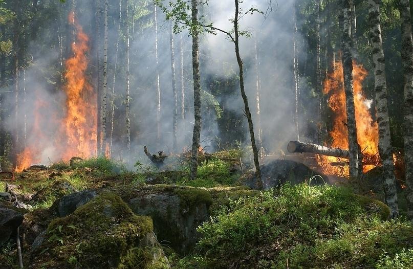 Высокий риск возникновения пожаров ожидается в томских лесах