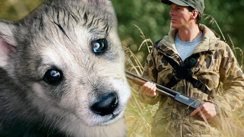 Не стреляй не надо это моя мама На глазах волчонка накатили слезы