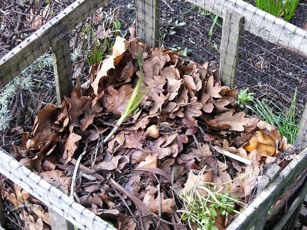 Осенние работы в саду и огороде, о которых я никогда не забываю. Приход осени не приносит так много хлопот в саду и огороде, как весна, но есть мероприятия, которые помогут разгрузить горячий