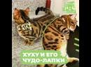 Волшебные лапки котика Хуху