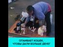Пенсионерка опаивала кошек алкоголем, чтобы просить милостыню — Москва 24