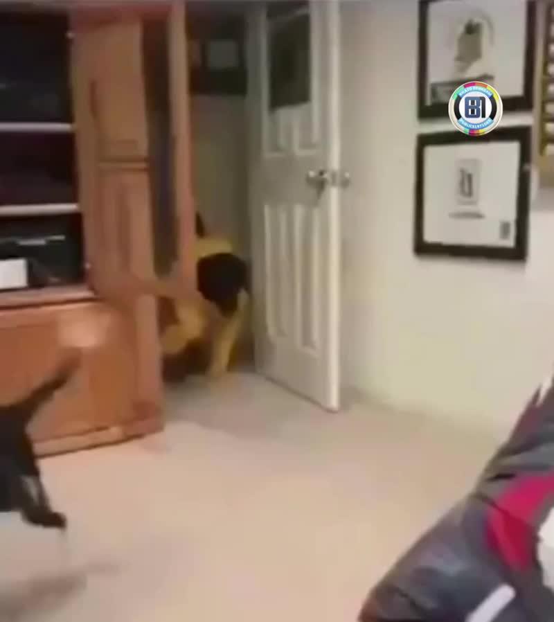 Купили значит свитер для собаки...