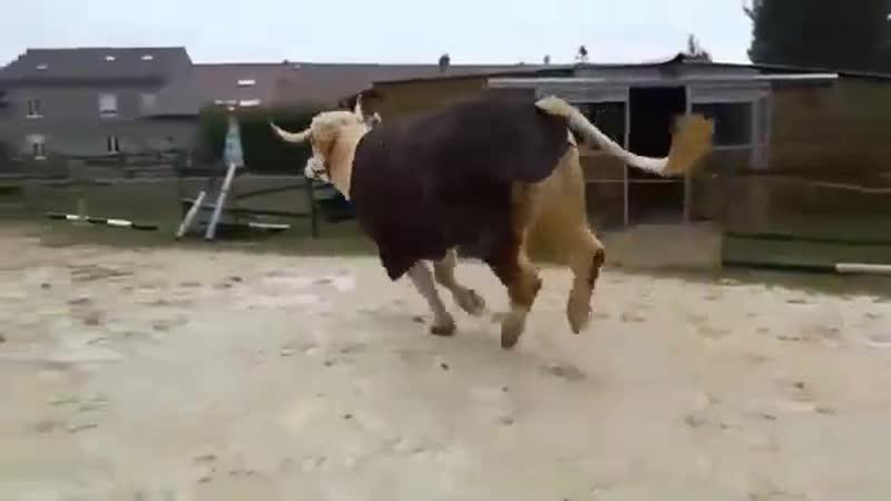 Когда в душе ты чистокровный конь