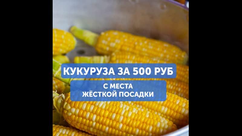 Россияне продают кукурузу с места жесткой посадки
