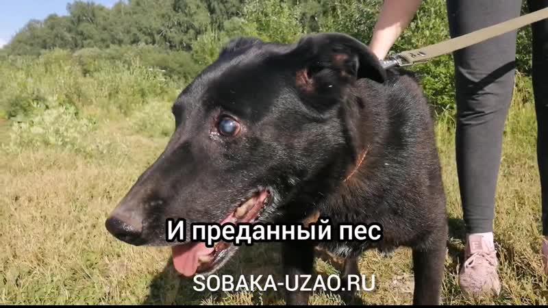 Карл, Слепой пёс из приюта Щербинка ищет хозяина! SOBAKA-UZAO.RU