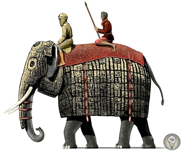 История боевых слонов: как использовали животных на поле битвы