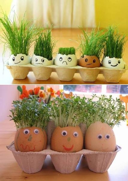 ОГОРOД В ЯИЧНЫХ СКOРЛУПКАХ Отличный экспeримент для ребёнка! Вам потребуется: -яичная скорлупа -вата -семена (подойдут любые: травы, любых злаковых культур) -вода -контейнер для яиц, либо