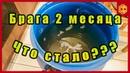 БРАГА СТОЯЛА 2 МЕСЯЦА ЧТО С НЕЙ СТАЛО Сан Саныч Самогонщиков
