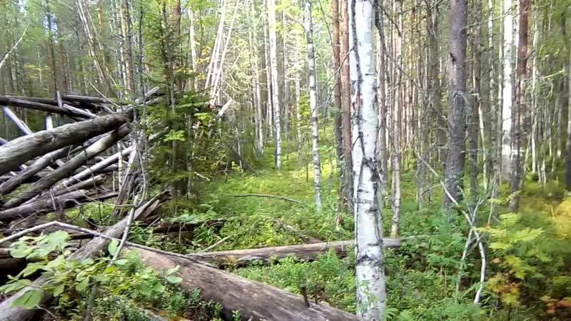 Вылазка на 28-й километр, в поисках грибов.