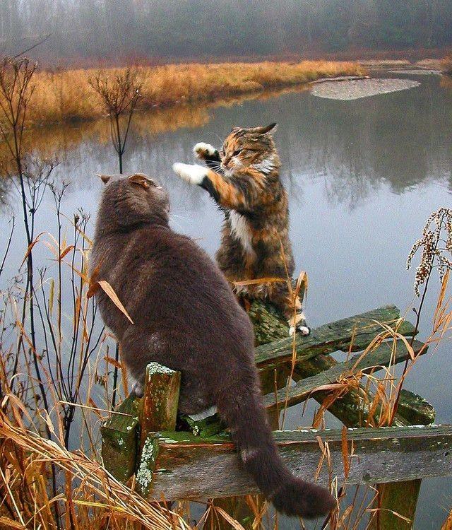 Разговор двух рыбаков