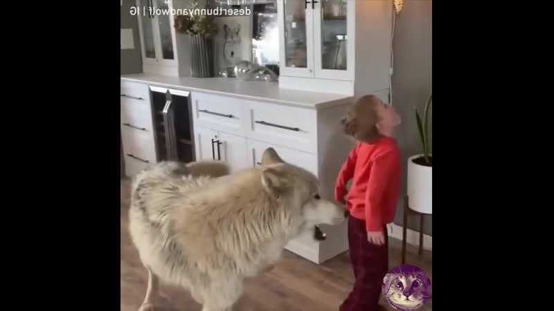 Peбёнoк и вoлк