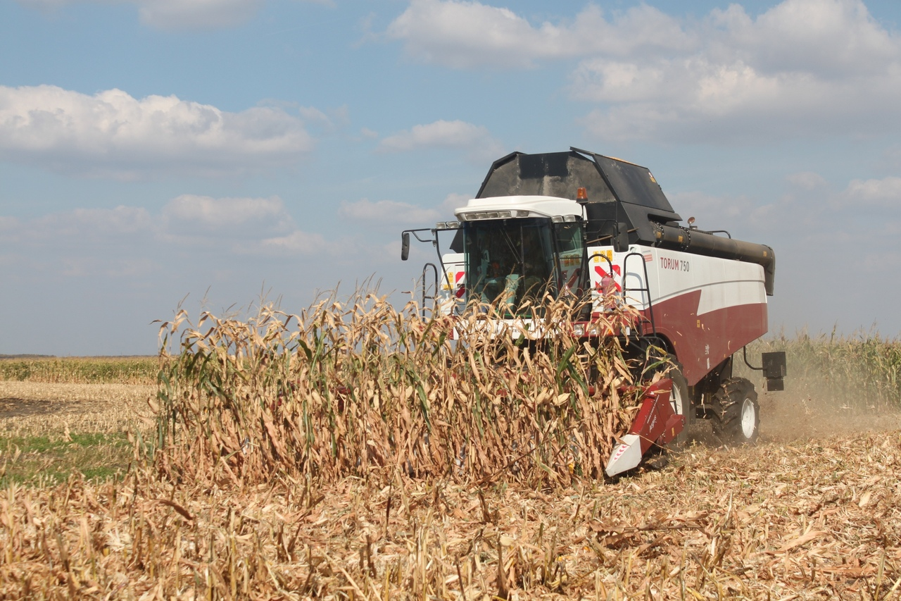 В Курской области успешно стартовала уборка кукурузы