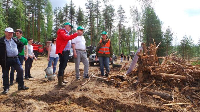 Работники лесной отрасли Марий Эл отмечают профессиональный праздник