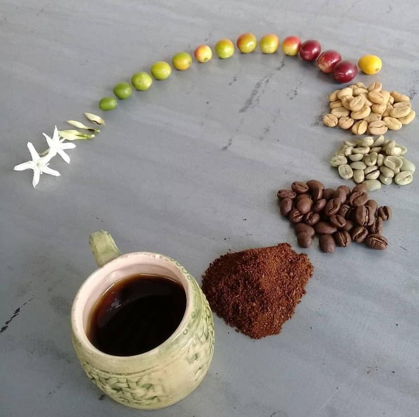 Путь от цветка до чашки кофе