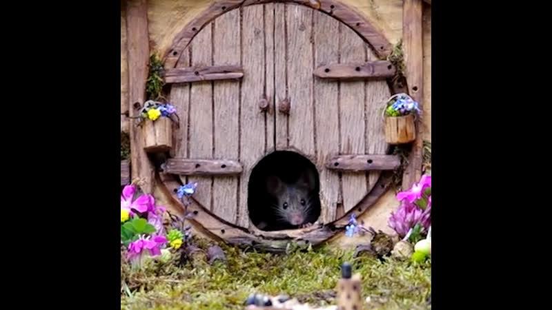 Мышиный дом