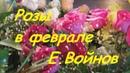 Евгений Войнов - РОЗЫ В ФЕВРАЛЕ