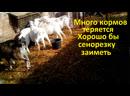 Много кормов у коз теряется Хорошо бы сенорезку заиметь
