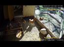 Курятник Онлайн \ Chicken Coop Online